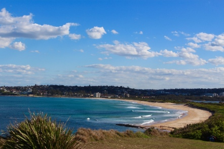 looking back at dee why beach from long reef point lookout.