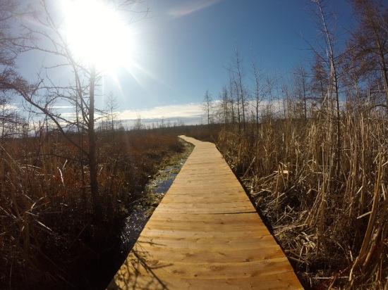 The lovely boardwalk.